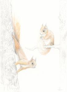 Red Squirrel Woodland