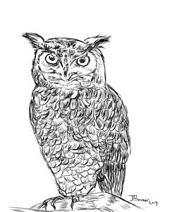 Owl Dry Ink Sketch
