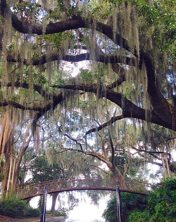 Florida canals - Peyton smith