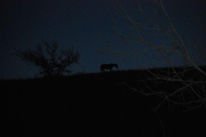 Dark horse - Peyton smith