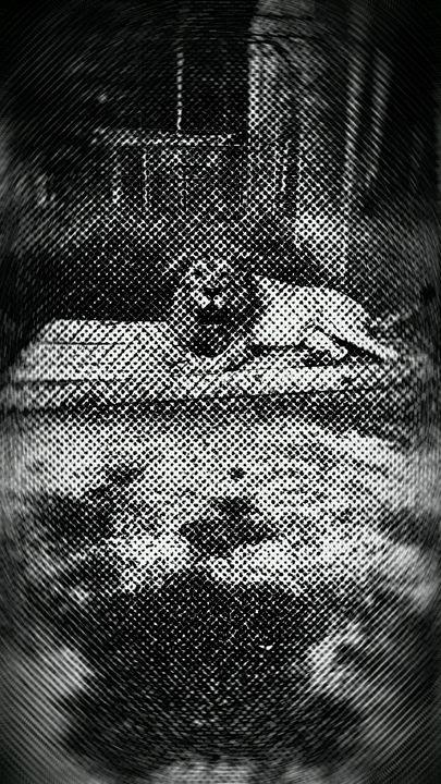 king lion - e cora