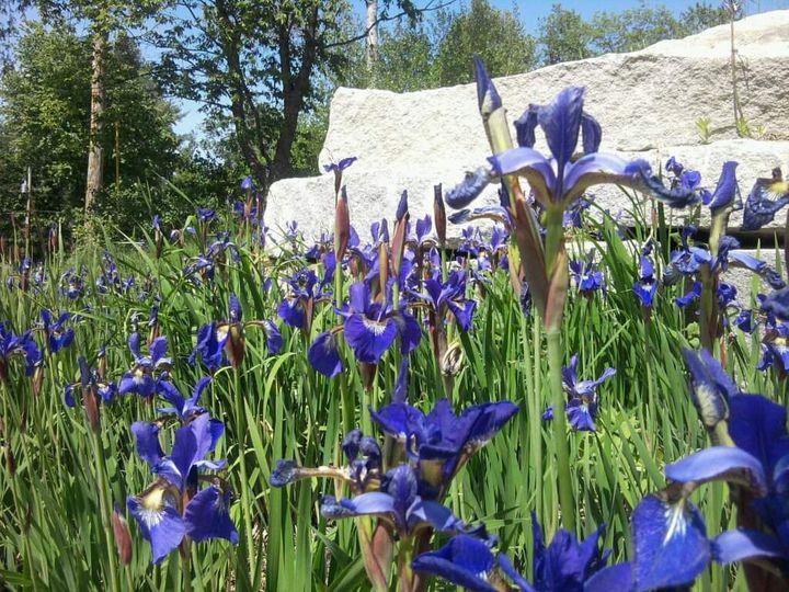Iris - Red Barn