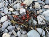 Photo of soft beach rocks