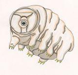 Tardigrade illustration print
