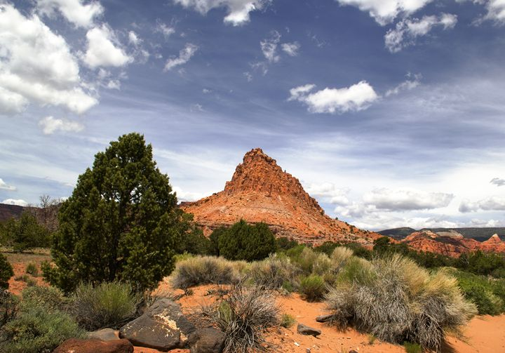 Capitol Reef National Park, - Mark Smith Nature Photography