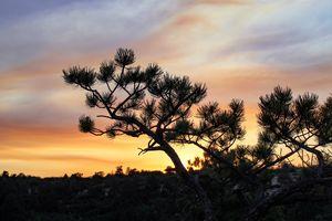 Palmer Sunset