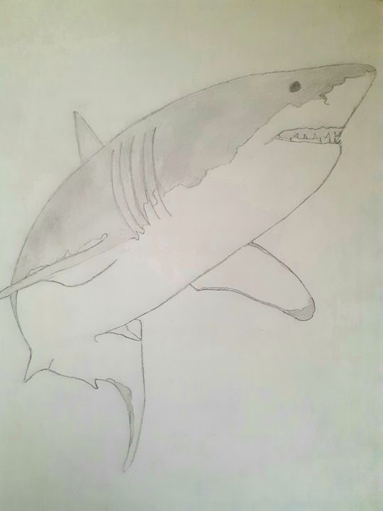 Great White Shark - Papyrus Art Pieces