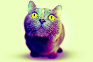 Rainbow Cat I