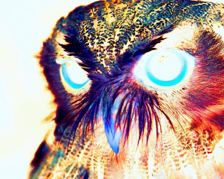Rainbow Owl - RA Williams