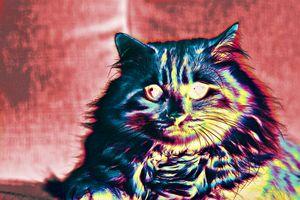 Rainbow Cat III
