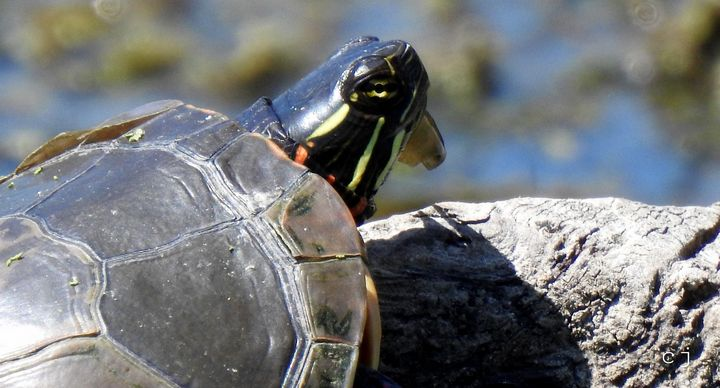 Turtle - Creativemind