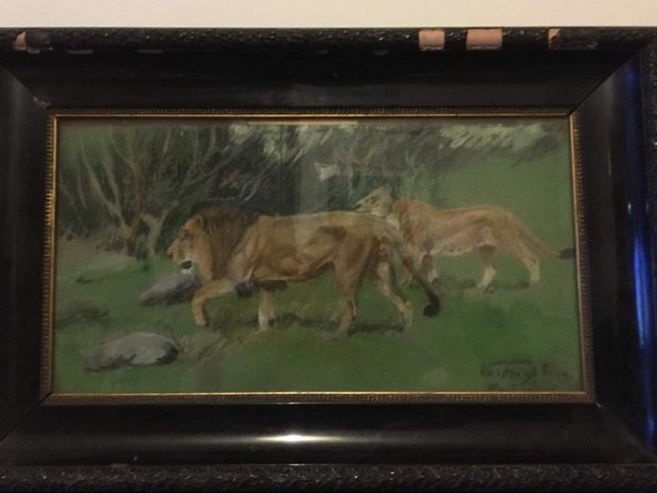 Lions - Daniel Gallery