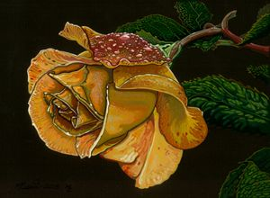 Yellow rose study.