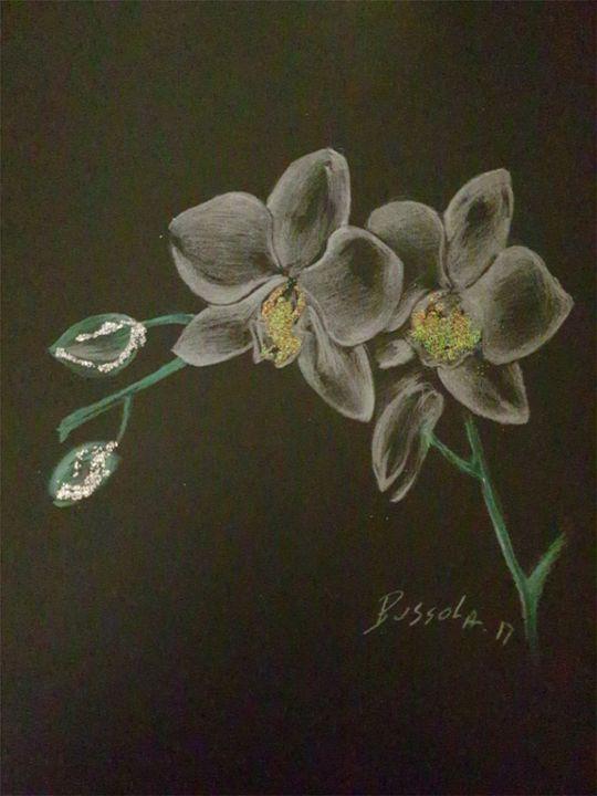 L orchidee - Michelebussola