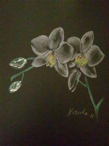 L orchidee