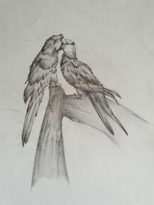 In amour de perroquet