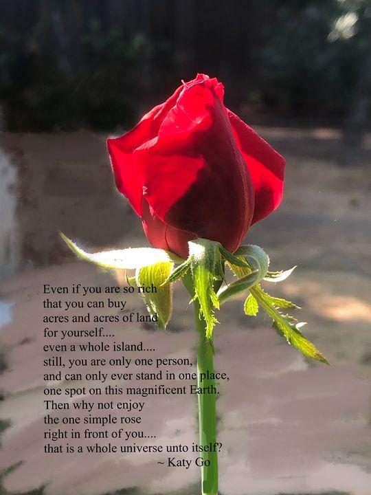One Simple Rose - Katy Go Art