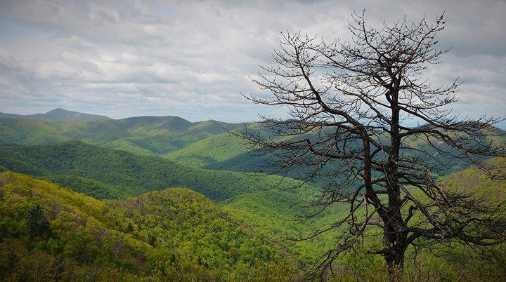 Blue Ridge Parkway View - NatureBabe Photos