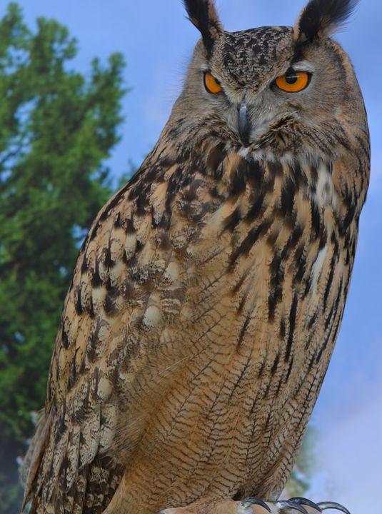Eurasian Eagle Owl - NatureBabe Photos