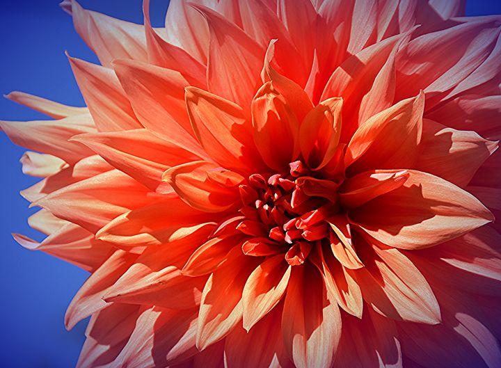 Dahlia and Blue Sky - NatureBabe Photos