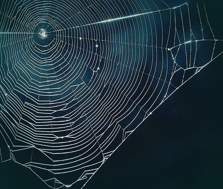 Spider Web - NatureBabe Photos
