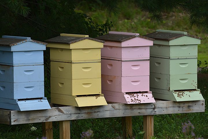 Colorful Honey Bee Apiaries - NatureBabe Photos