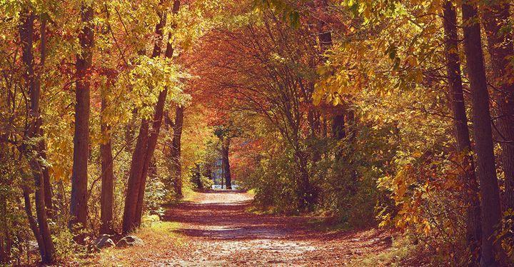 Embraced by Warm Foliage - NatureBabe Photos