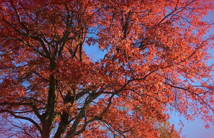 Colors of Fall - NatureBabe Photos