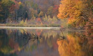 Transylvania Pond in Autumn