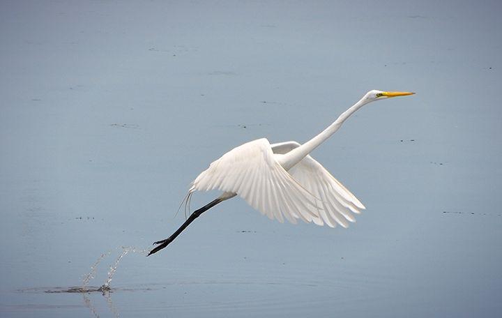 We have Takeoff - NatureBabe Photos
