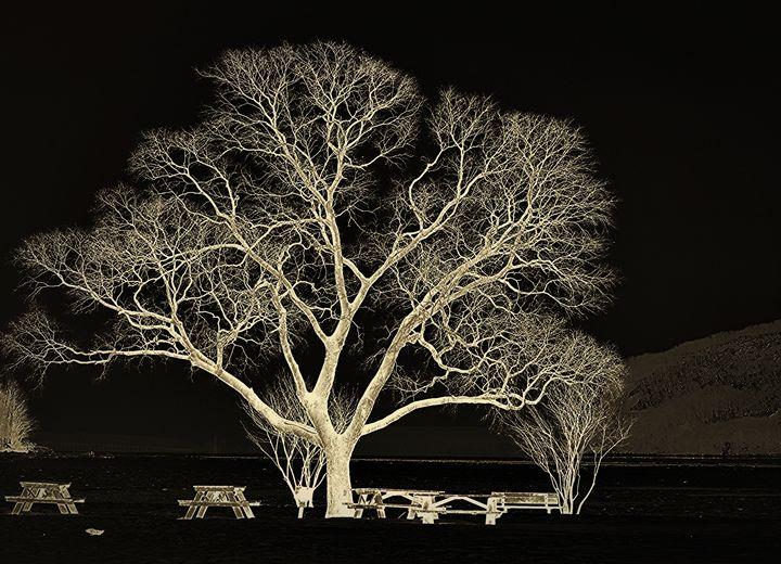 Oak Tree Silhouette - NatureBabe Photos