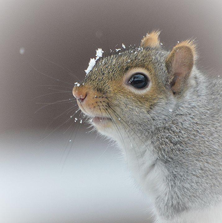 Catching Snowflakes - NatureBabe Photos