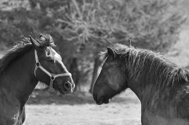 Two Horses Stare Each Other Down - NatureBabe Photos