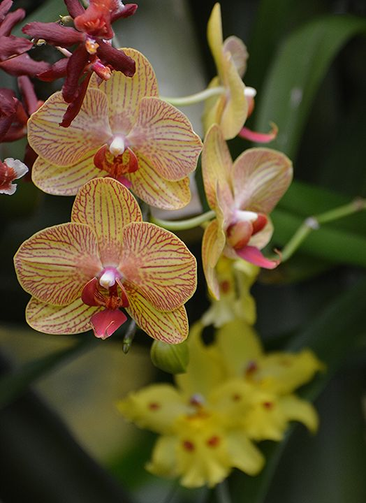 Elegant Orchids - NatureBabe Photos