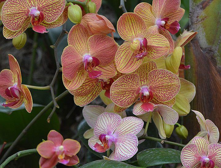 2018 NY Orchid Show - NatureBabe Photos