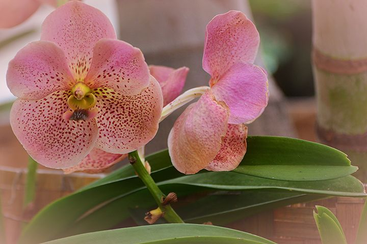 Pretty in Pink - NatureBabe Photos