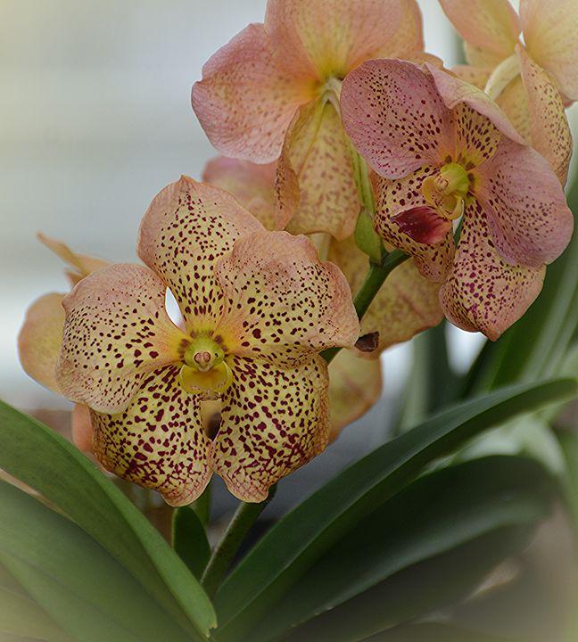 Exotic Beauty - NatureBabe Photos