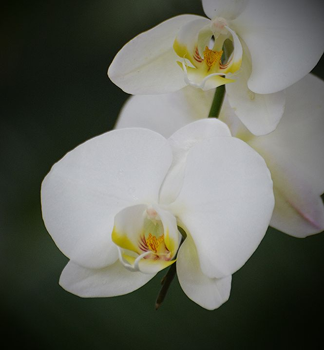 Simply Elegant - NatureBabe Photos