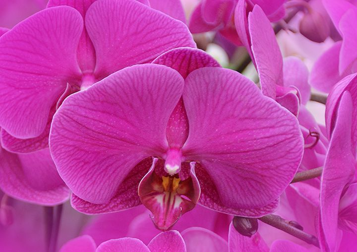 Vibrant and Bold Orchids - NatureBabe Photos