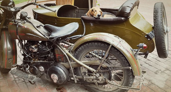 Doggy in a Side Car - NatureBabe Photos