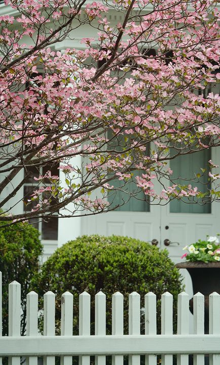 Springtime in Suburbia - NatureBabe Photos