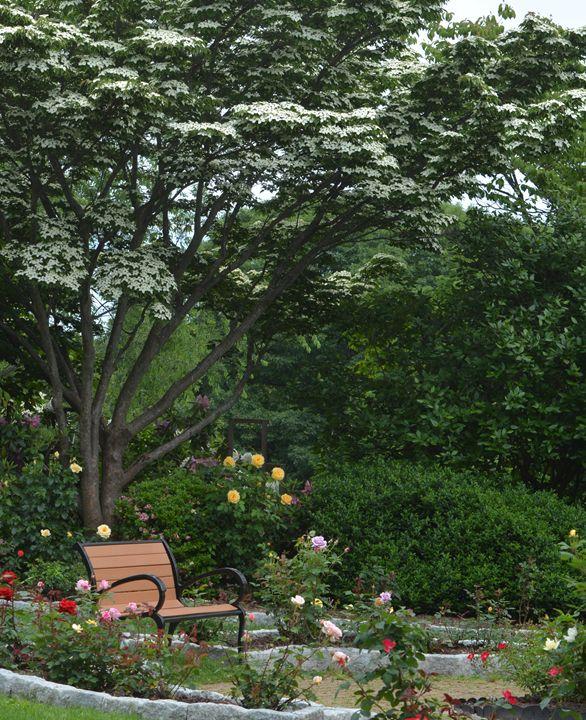 In the Rose Garden - NatureBabe Photos