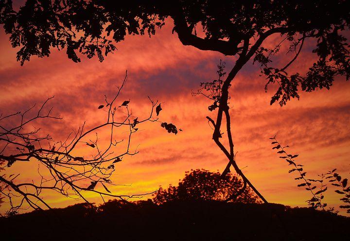 September Sunset Silhouette - NatureBabe Photos