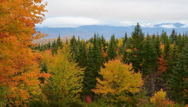 White Mountains in Fall - NatureBabe Photos