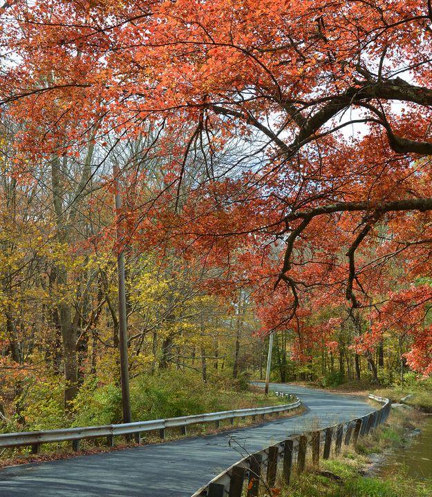 Roadside Foilage - NatureBabe Photos