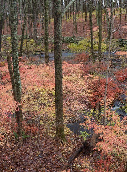Late Fall Colors - NatureBabe Photos