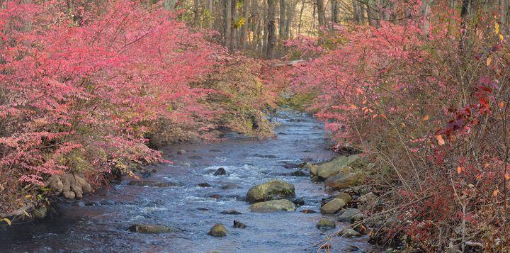 Riverbank Pink - NatureBabe Photos