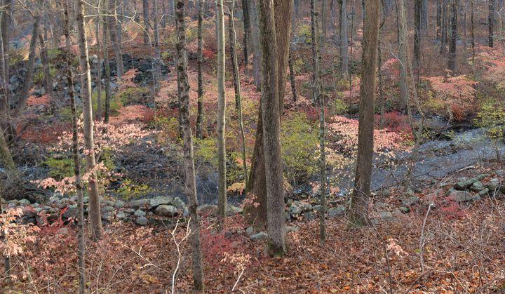 Into the Woods - NatureBabe Photos
