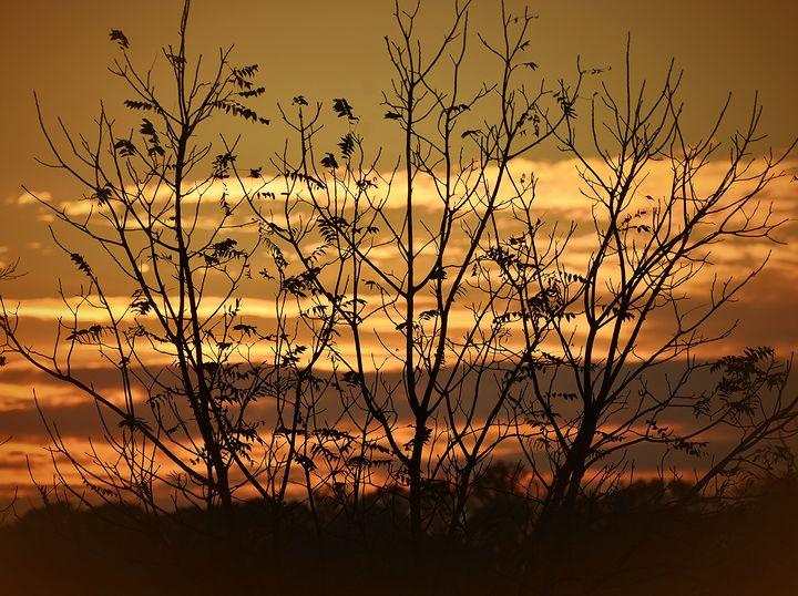 Halloween Sky - NatureBabe Photos