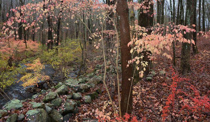 Creekside Autumnal Colors - NatureBabe Photos